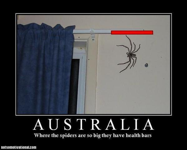 no spiders
