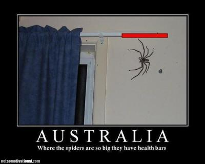 australia-huge-spiders-health-bar.jpg.jpeg