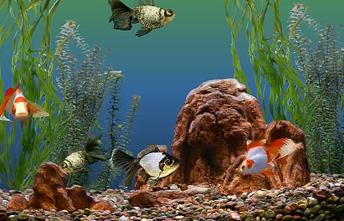fiskar--.png